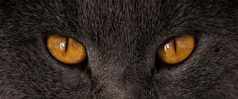 Augen Balou.jpg