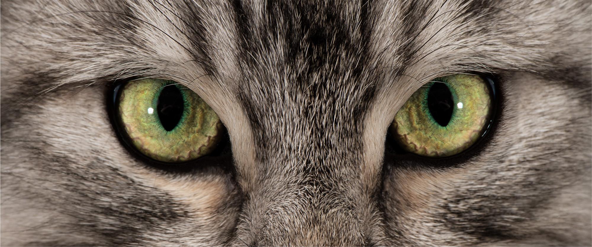 Augen Bonny.jpg