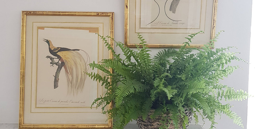 """A Pair of Two Original French Lithographs """"Birds of Paradise"""" in  Guild Frames"""