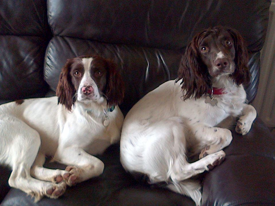 Jetly (Left)
