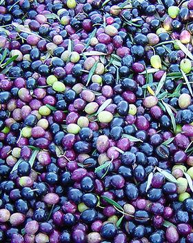 hunter-valley-olives.jpg