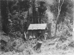 Goat Stream 1928