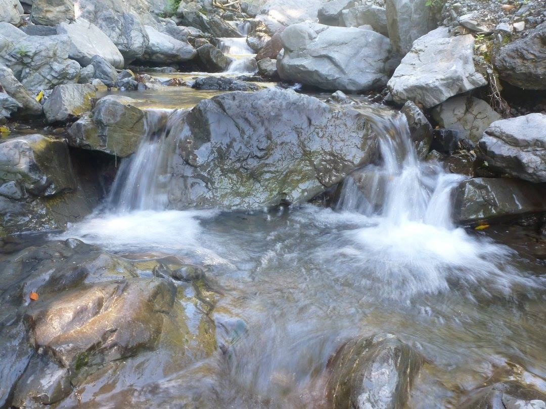 Brown's Stream