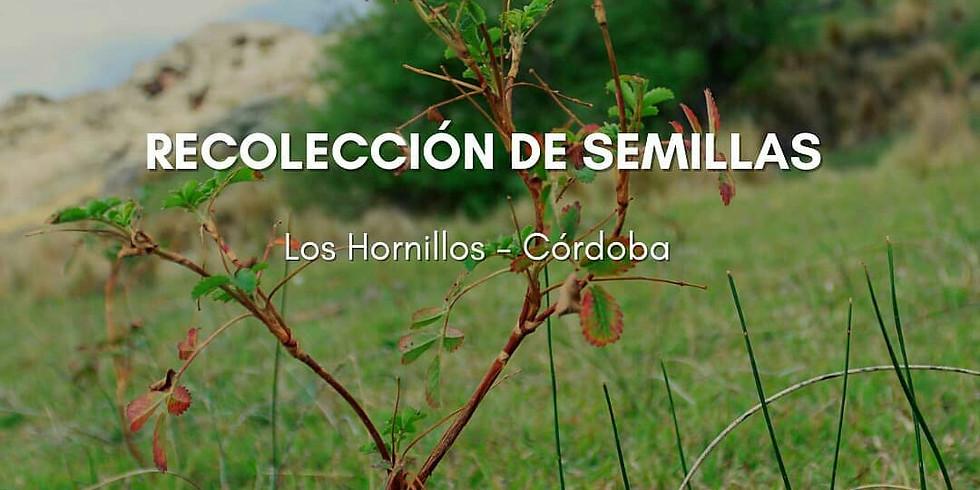 👑 Jornada de recolección de semillas - Los Hornillos Córdoba