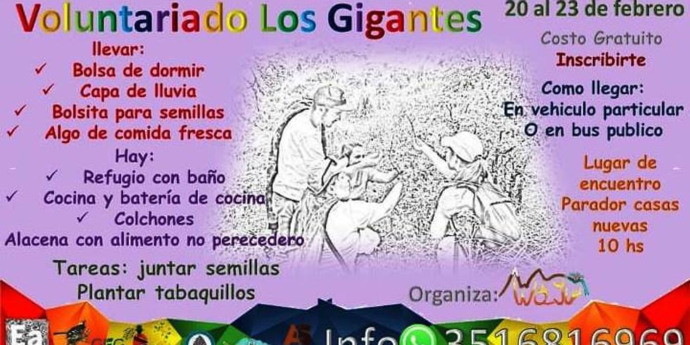 Voluntariado de recolección de semillas en Los Gigantes - Córdoba