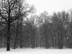 FEATURE_silent snow.jpg