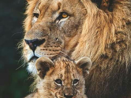 Reconhecimento de paternidade e seus efeitos