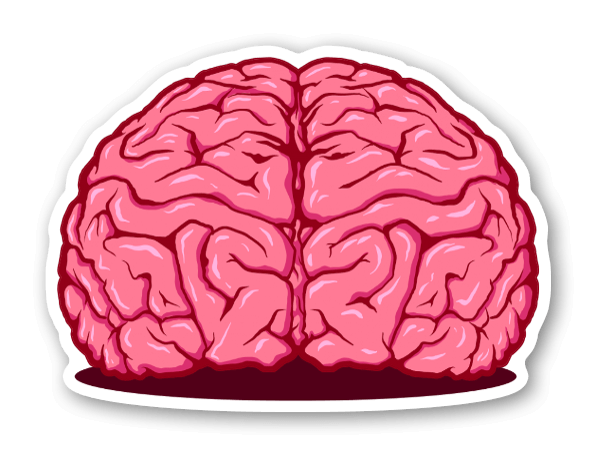 cervella