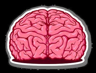 cervella.png