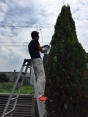 刈込、剪定、伐採など、高所作業も可能です。