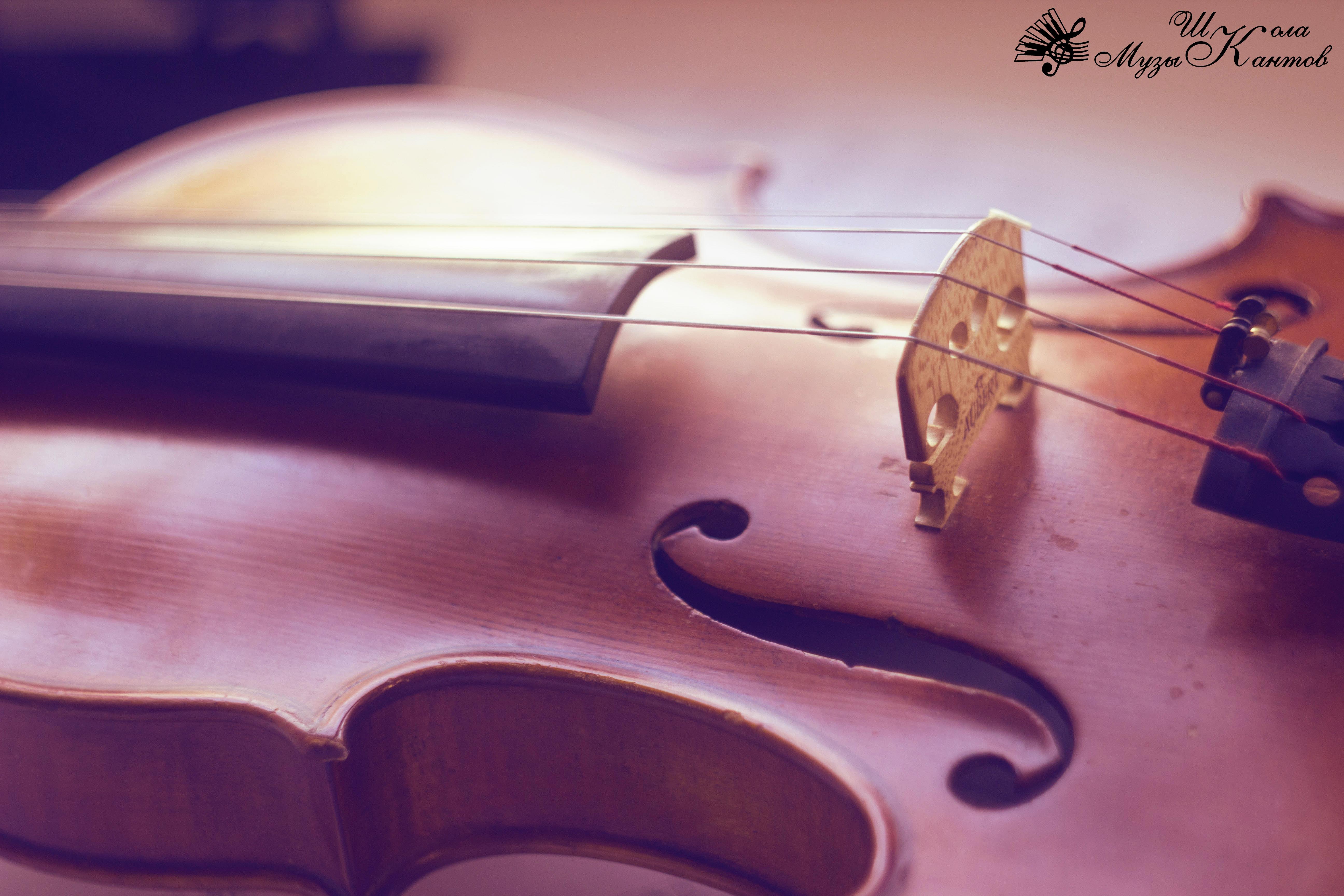 Копия скрипка 4
