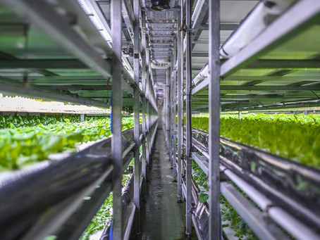 Alternative farming -  Hydroponics