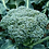 Thumbnail: Broccoli (Autumn Calabrese) seeds
