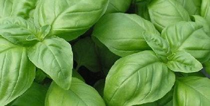 Basil (Classic Italian) seeds