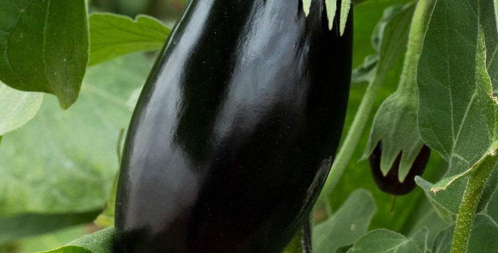 Aubergine (Black Beauty) seeds