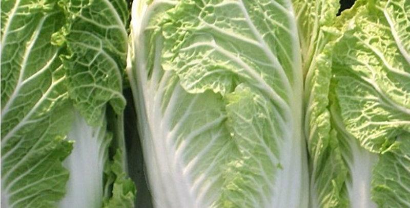 Cabbage (Wong Bok) seeds