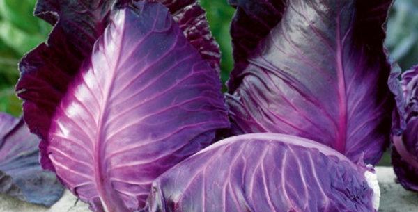 Cabbage (Kalibos) seeds