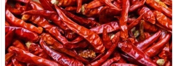 Chilli (Kashmiri Mirch) seeds