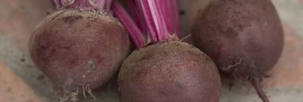 Beetroot (Boltardy) seeds