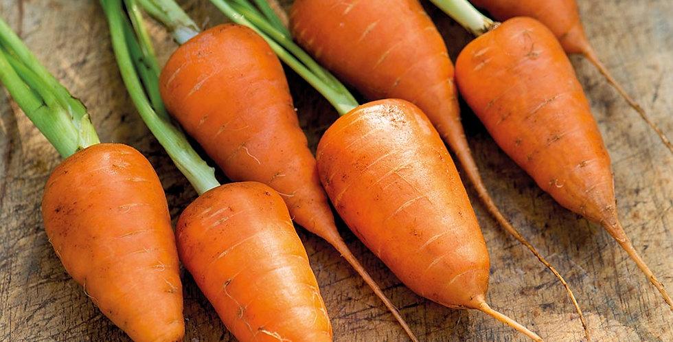 Carrot (Royal Chantenay) seeds