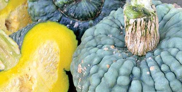 Pumpkin (Marina di Chioggia) seeds