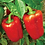 Thumbnail: Pepper (California Wonder) seeds