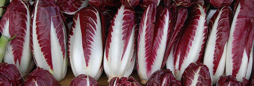 Radicchio (Rossa di Treviso Precoce) seeds