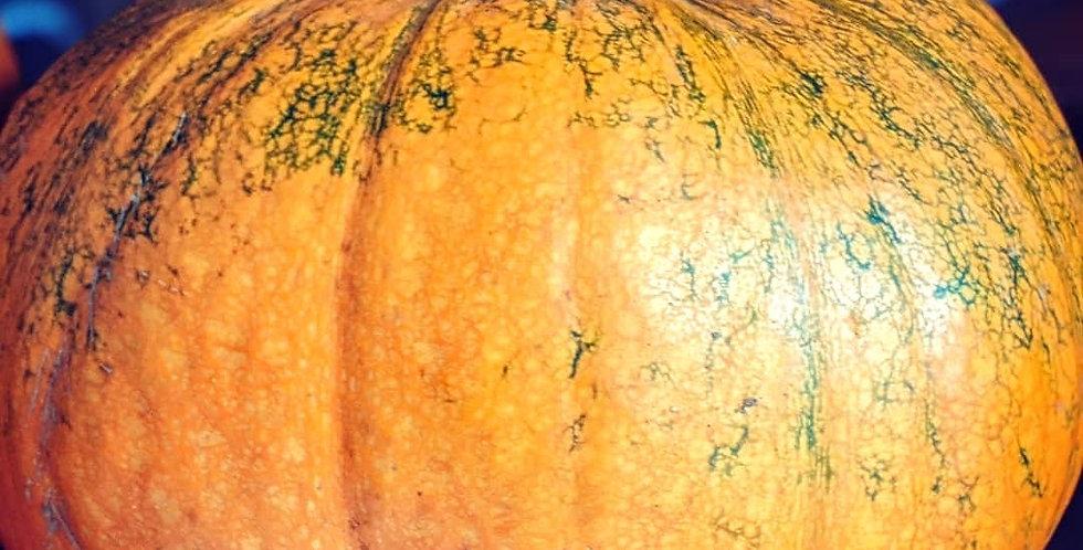 Pumpkin (Jack of all Trades) seeds