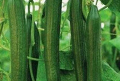 Cucumber (Masterpiece) seeds