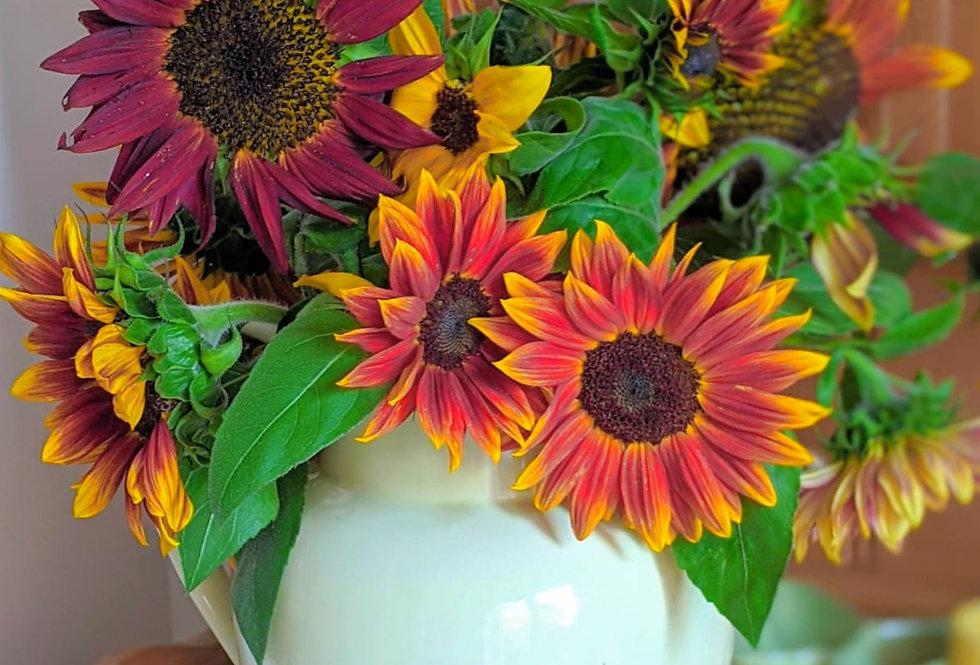 Sunflower (Harlequin) seeds
