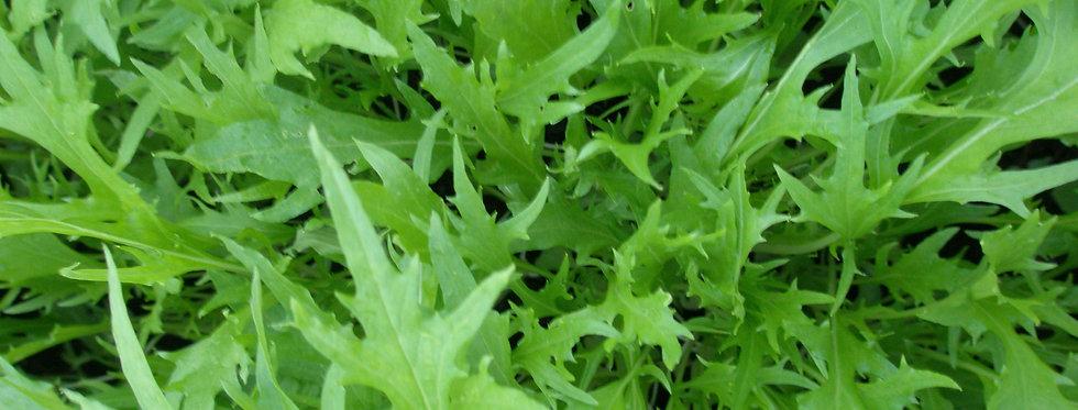Salad Leaf (Mizuna) seeds