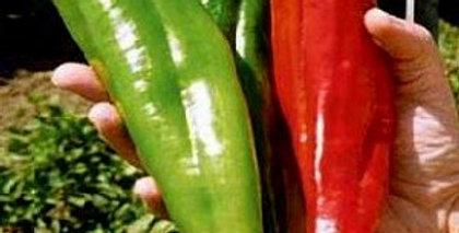 Chilli (NuMex Big Jim) seeds