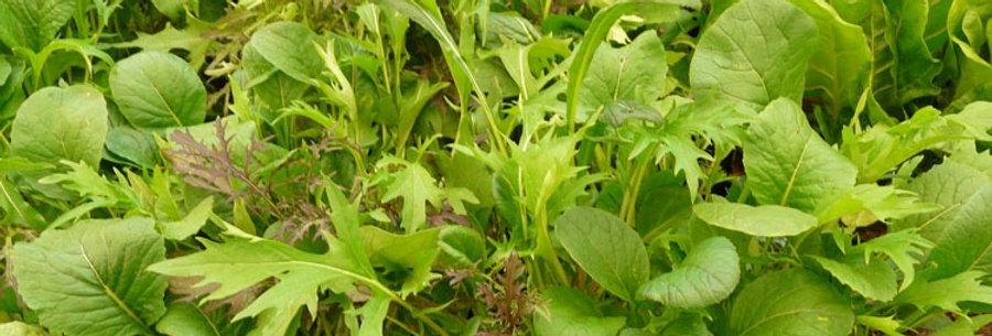 Salad Leaf (Mixed Oriental Leaves) seeds