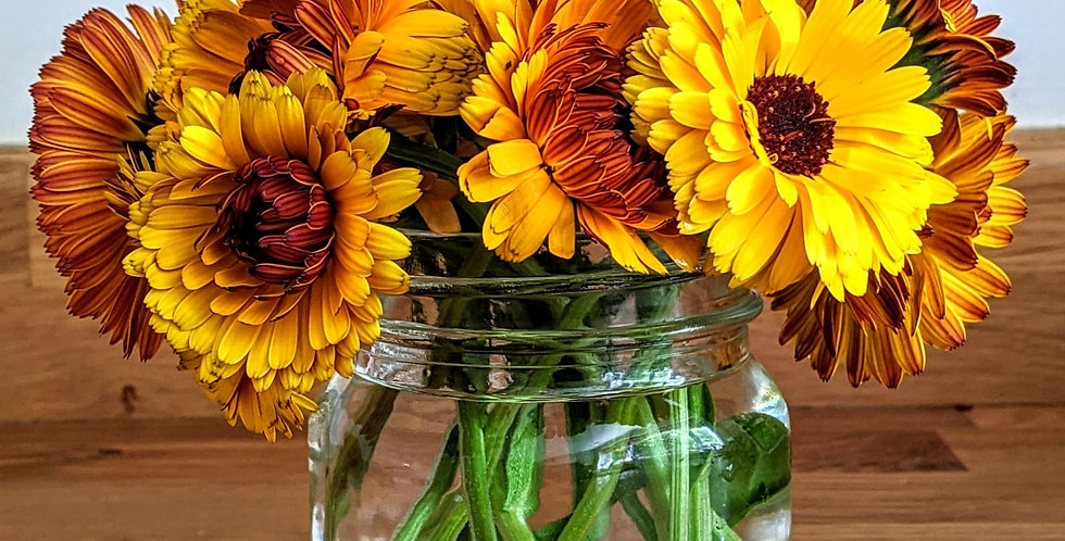 Calendula (Pot Marigold) seeds