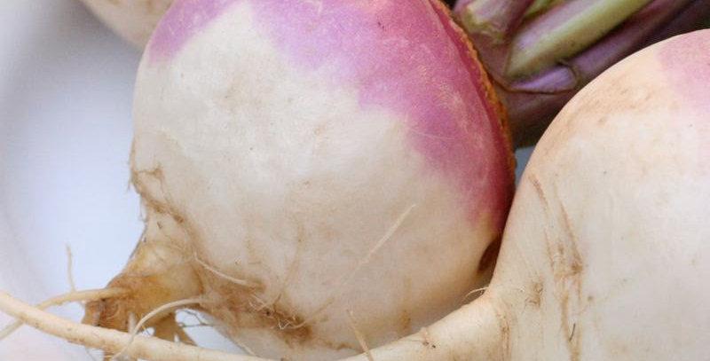 Turnip (Milan Purple Top) seeds