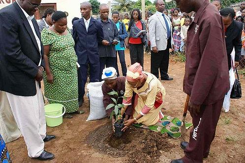 Contribuisci all'acquisto di manioca da semina
