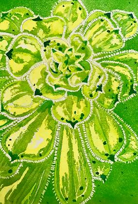 A3 Green star (succulent) digital print