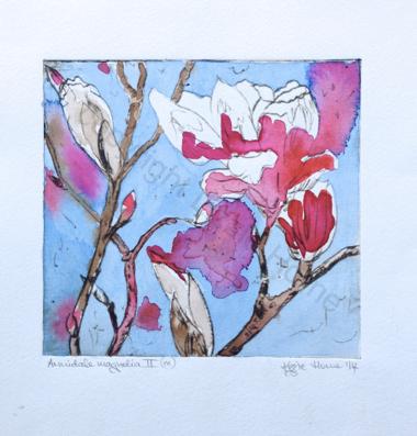 Armidale Magnolia II (ix)
