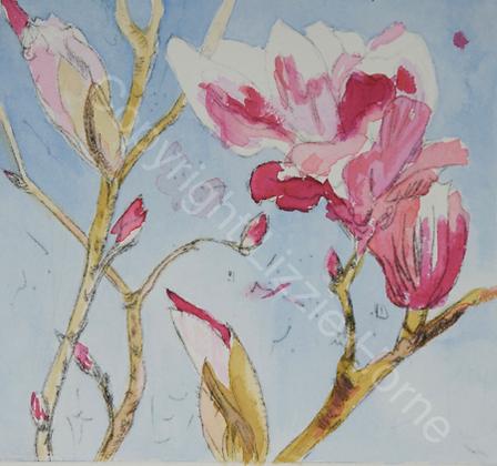 Armidale magnolia II (v) SOLD