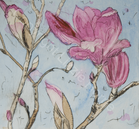 Armidale magnolia II (ii) SOLD