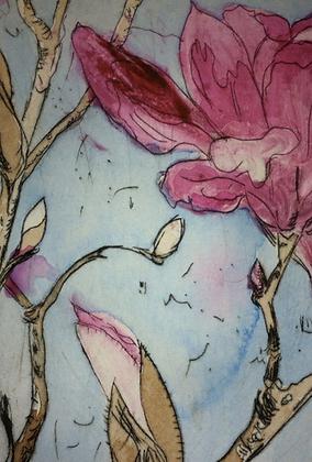 #4 Armidale magnolia II (ii) x 6