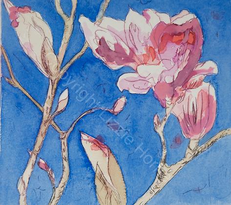 Armidale magnolia II (vi)