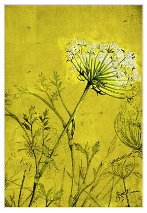 A3 Summer field Queen Anne's lace digital print