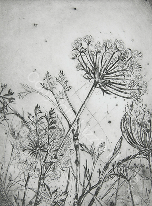 Summer field, Queen Anne's lace 2/10 SOLD