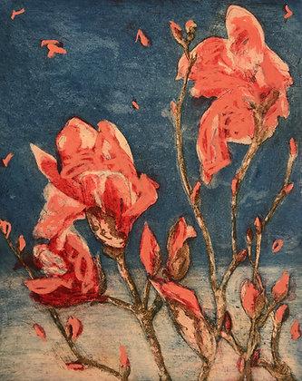 Armidale magnolias IV v2