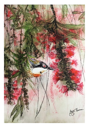 A3 Callistemon time (Eastern spine bill) dig print