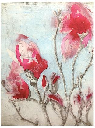 Armidale magnolia IV (vii) NFS