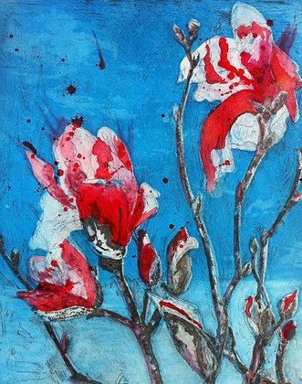 #21 Armidale magnolia IV x 6