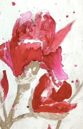 #32 Armidale magnolia IV (vi) x 6