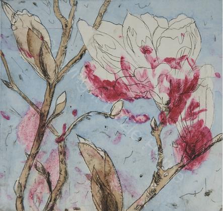 Armidale Magnolia II (i) SOLD